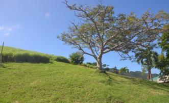 Lawler Hill Land