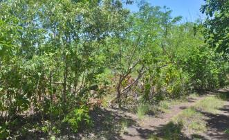 Cinnamon Gardens Estate Land
