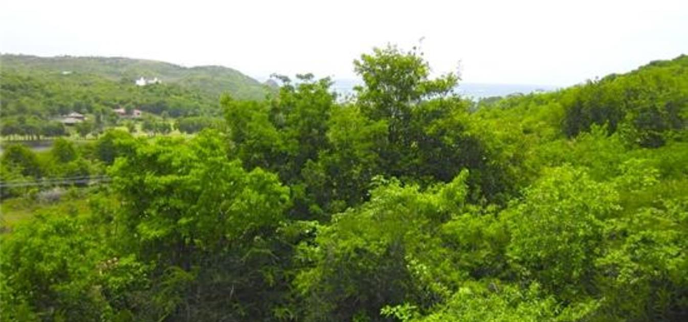 Byron Land