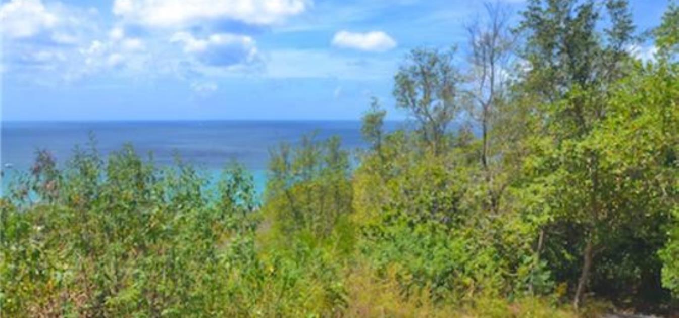 Lower Bay Hillside Land
