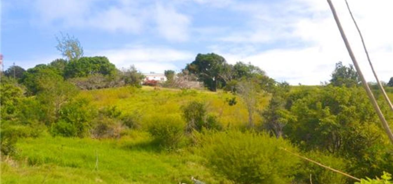 Mount Pleasant Prime Land