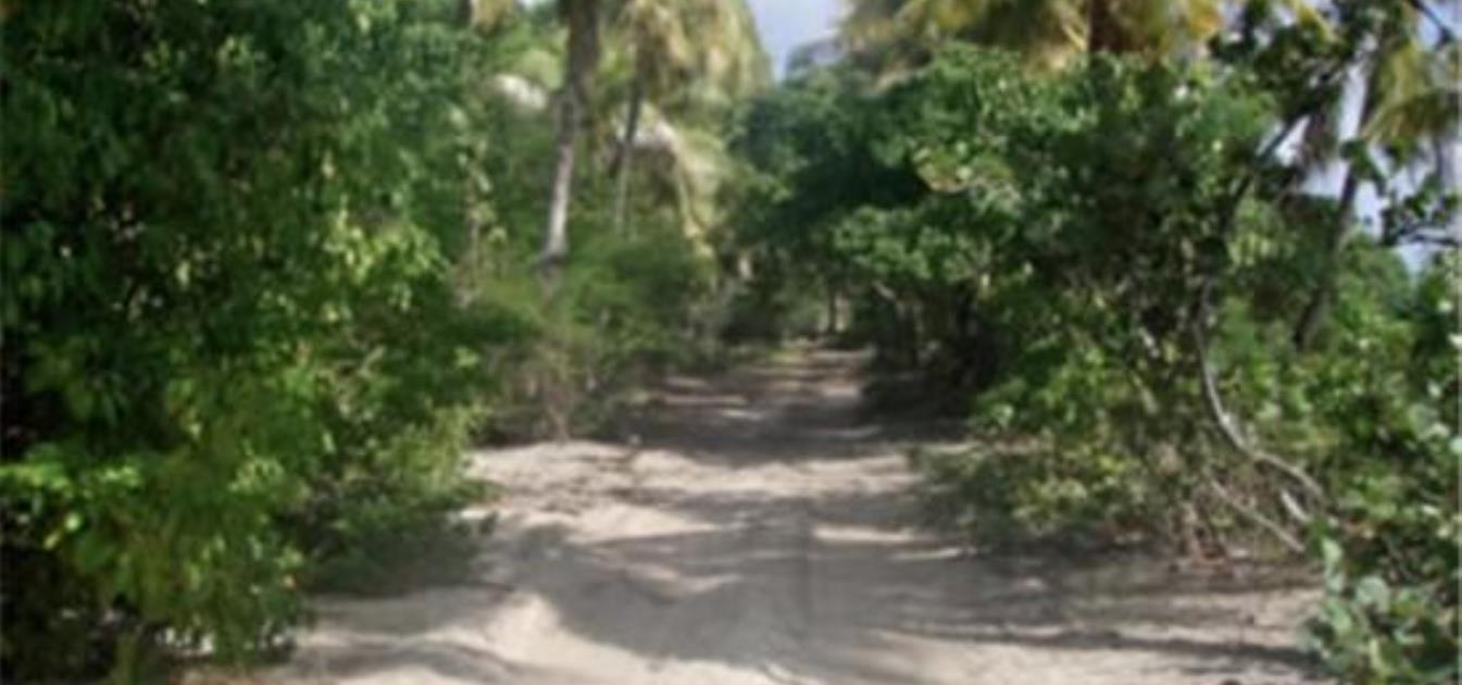 Baie de Sucre Hillside Land 1/2 Acre