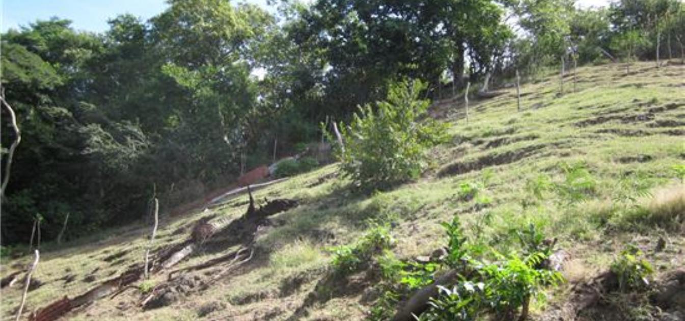 Hillside Land Prospect 0.25 Acre
