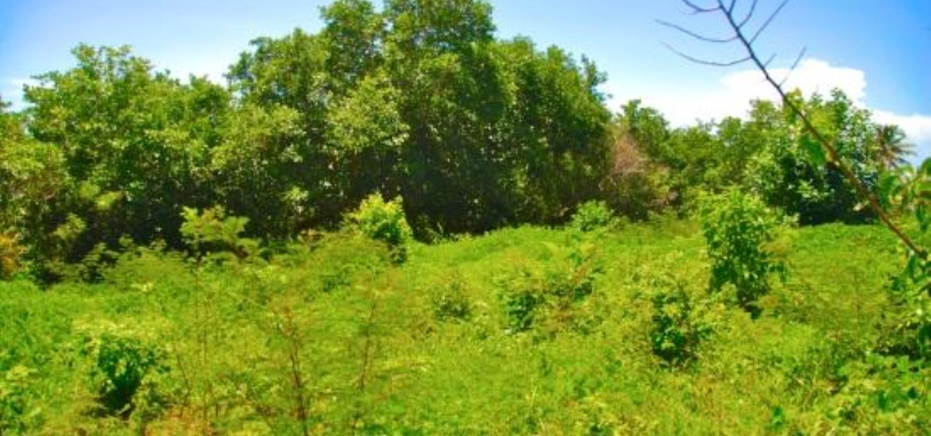 Bequia Ridge Land, Camel