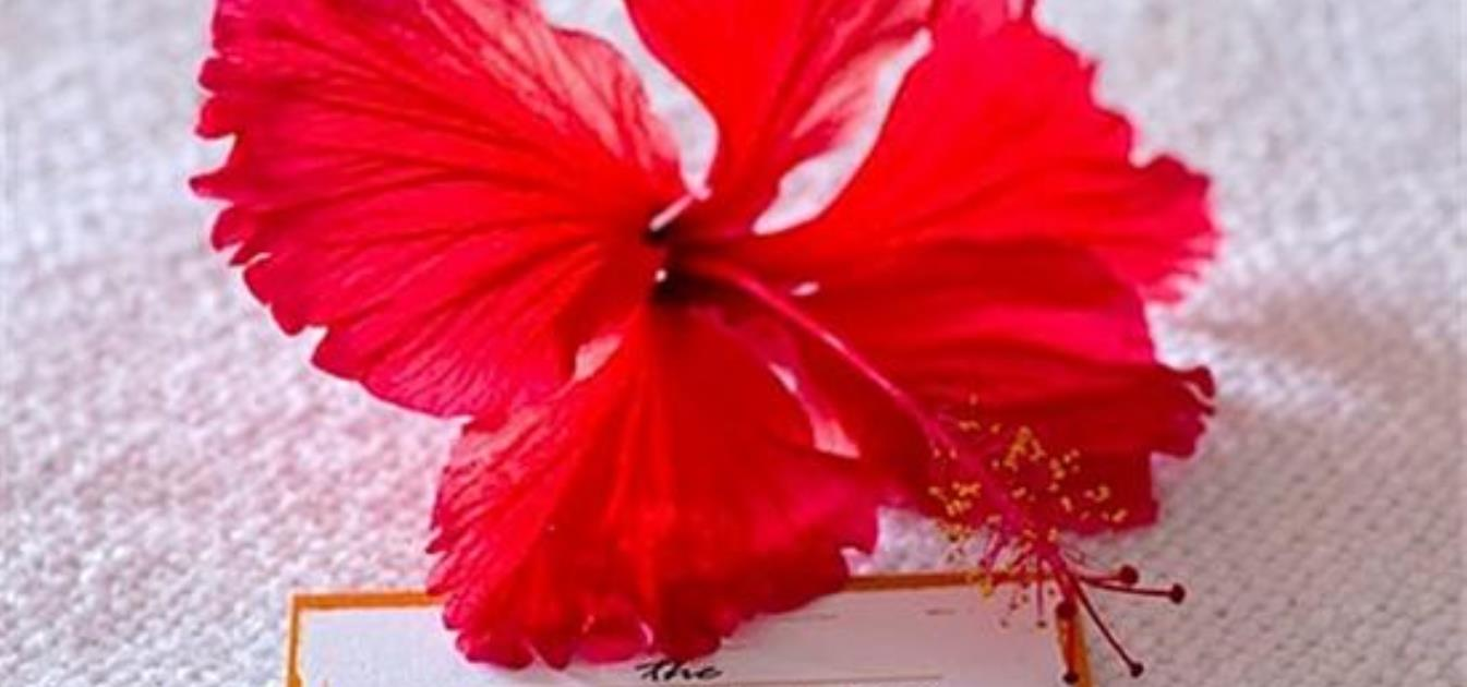 vacation-rentals/st-vincent-and-the-grenadines/bequia/hamilton/daffodils-boutique-bandb