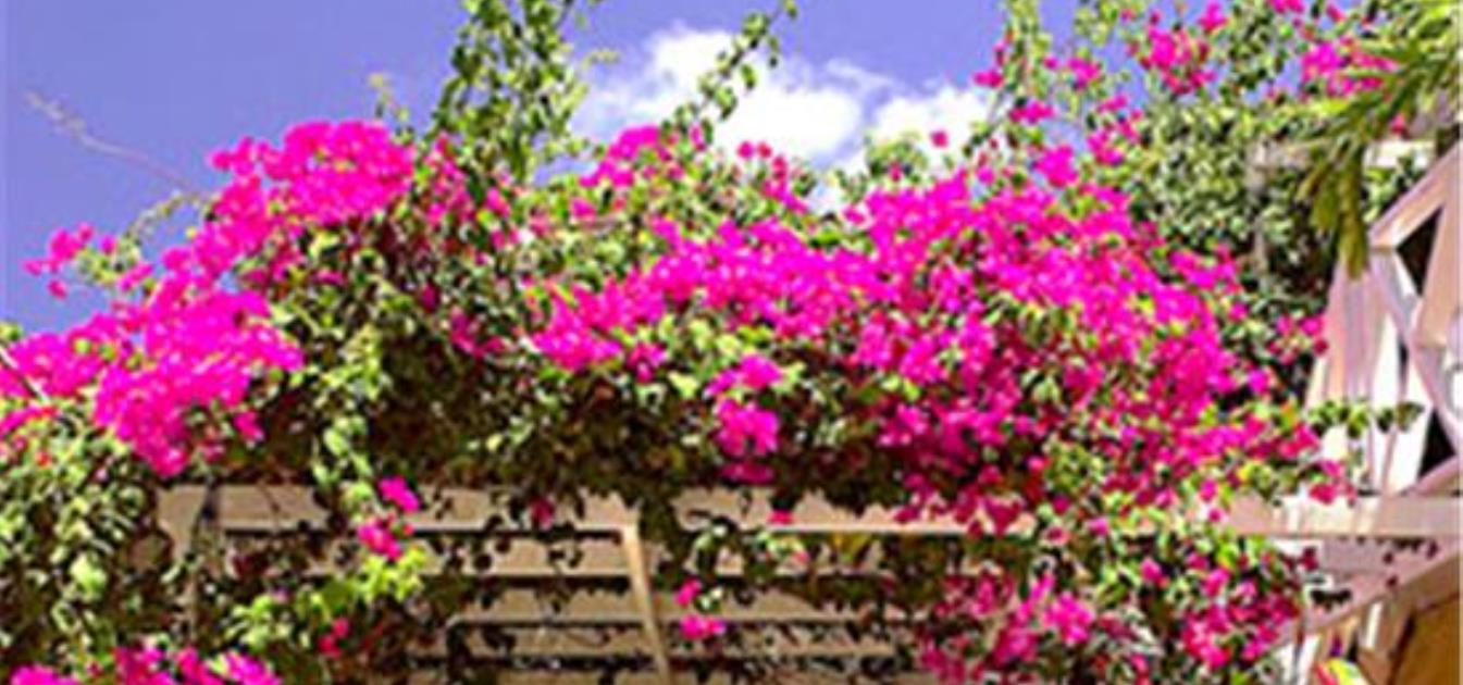 vacation-rentals/st-vincent-and-the-grenadines/union-island/clifton/bougainvilla-hotel